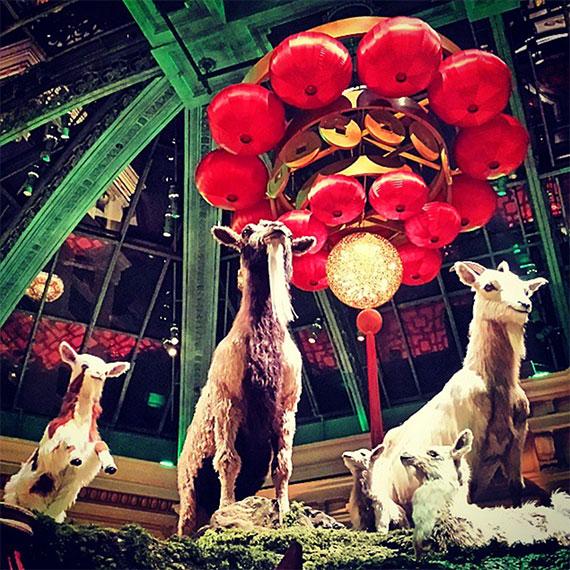 alipomi_bellagio_yr_of_the_goat_570