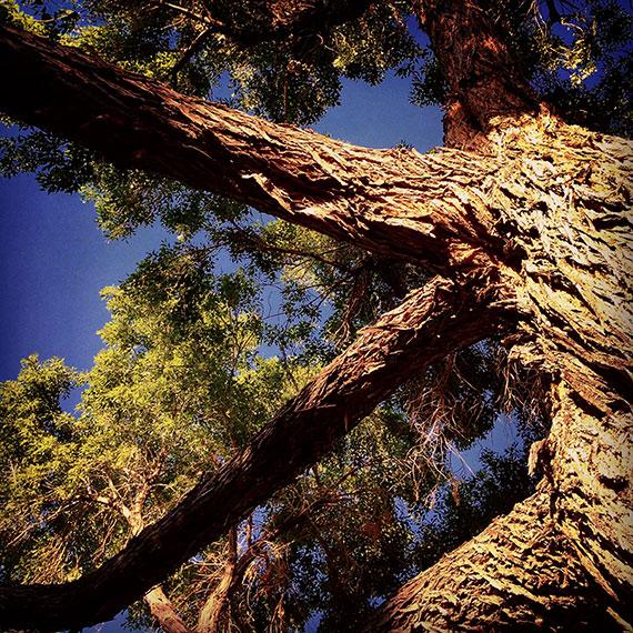 allison_hayward_tree_570