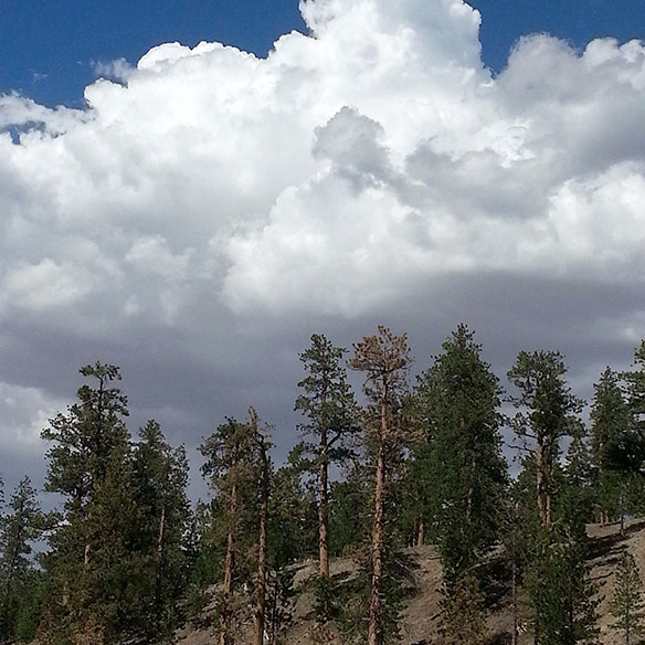 bill_arthur_Lee-Canyon-Meadow-View_584