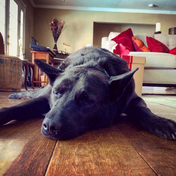 Eeva_the_pooped_pup