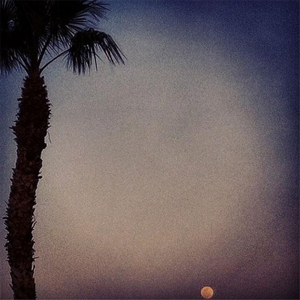 emendre_palm_sky_584