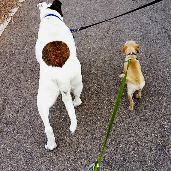 emendre_two_dogs_570