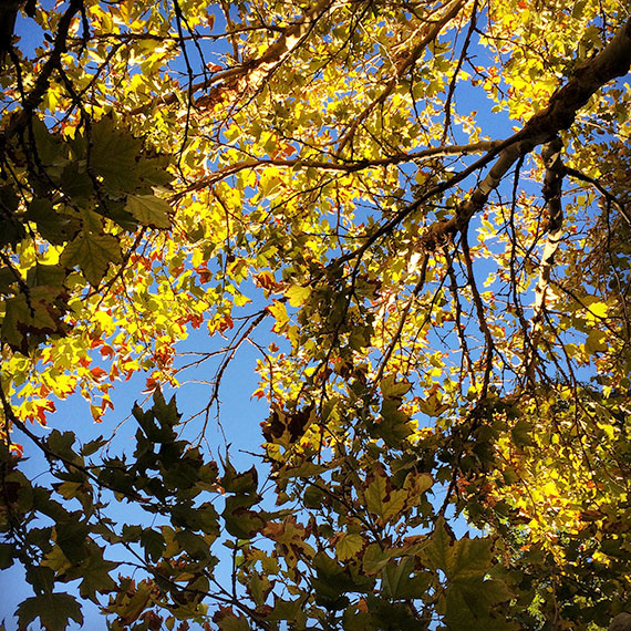 fall_colors_570