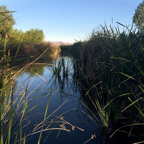 jocelyn_luna_wetlands_570