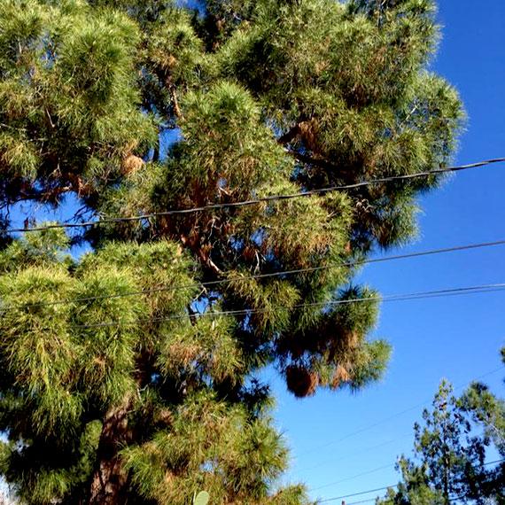 lstamanis_backyard_tree_570