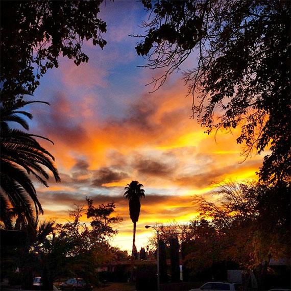 palm_neighborhood_sunset_570