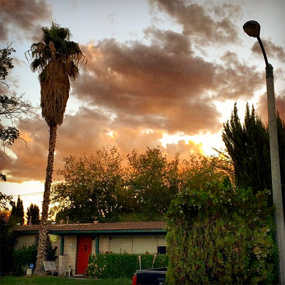 palm_street_light_in_the_570