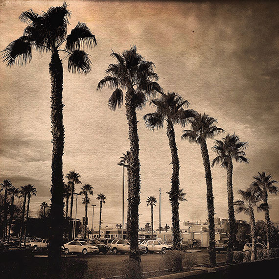 Palms-Perspective_3448_570