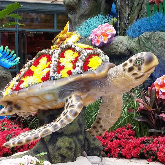 sdouglas_bellagio_turtle_570