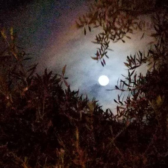 sdouglas_full_moon_through_trees_570