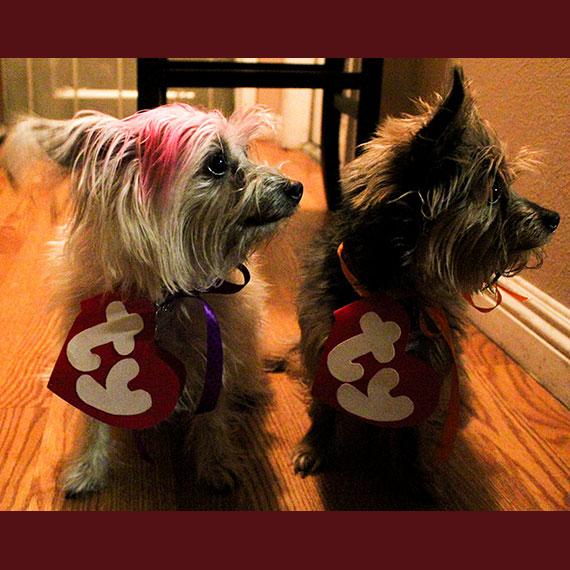 smartinez_beanie-puppies_570