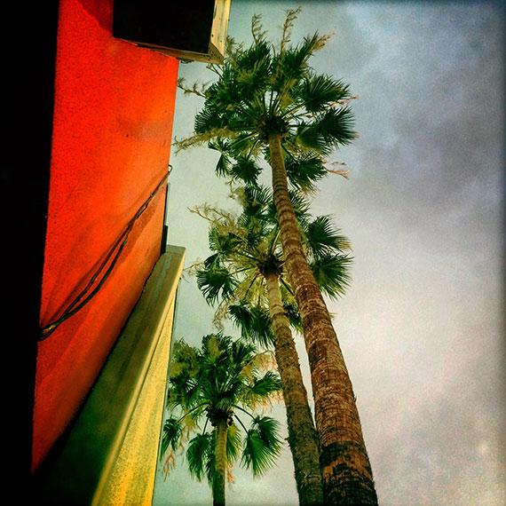 three_palms_7639_570