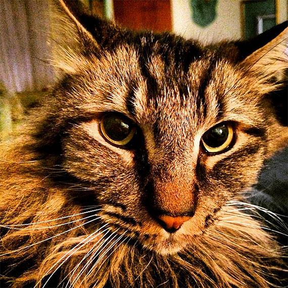 topper_cat_nephew_570