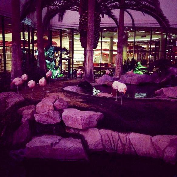 tyler_naegle_flamingos_584