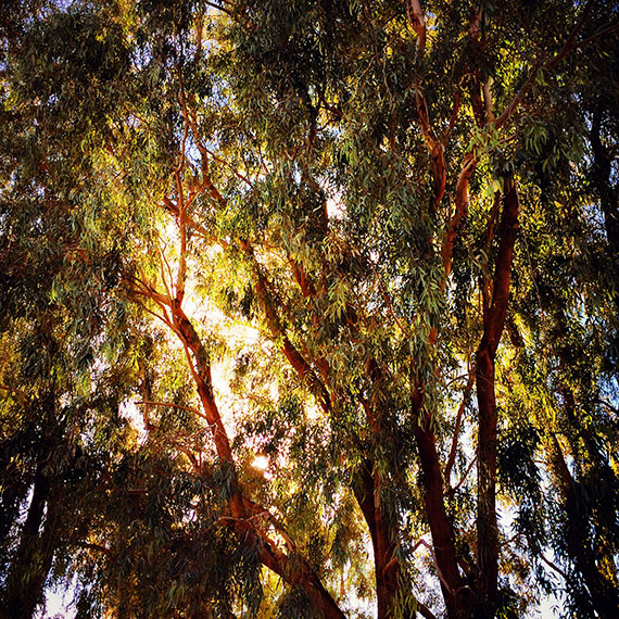 winchester_center_tree_570