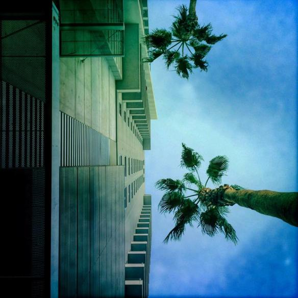 worms_eye_view_palm_building