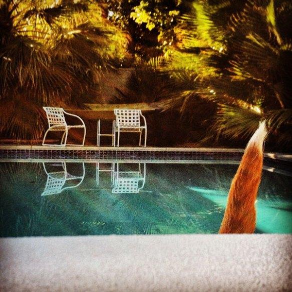 dog_tail_swimming_pool_600