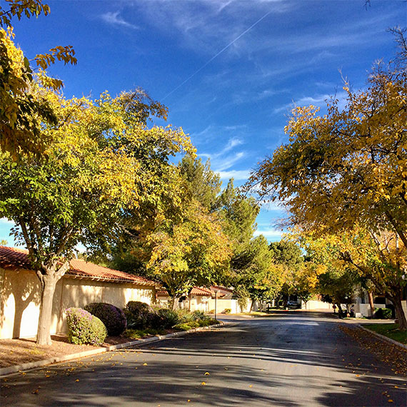 spanish_oaks_fall_570