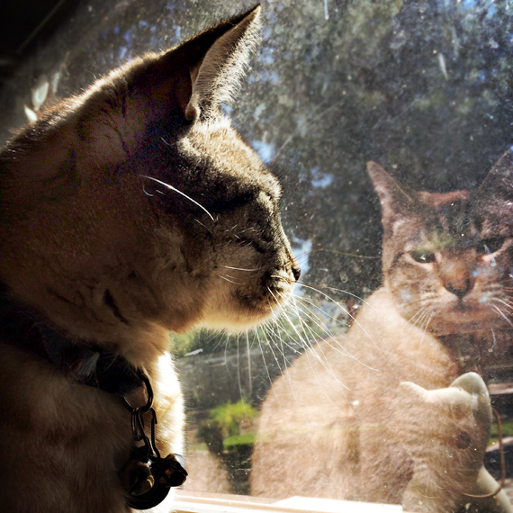 Harry_the_Cat_570