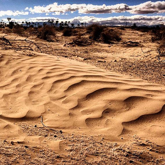 tiny_dune_sunset_park_trail_570
