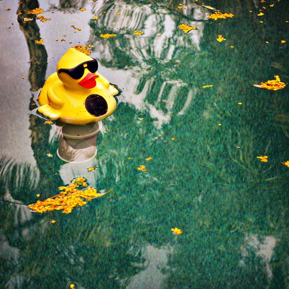 Pool_duck_570