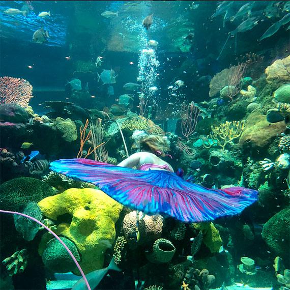 dperez_mermaid_sighting_2_570