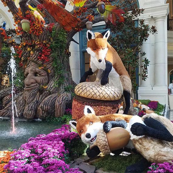 sdouglas_conservatory_foxes_acorns