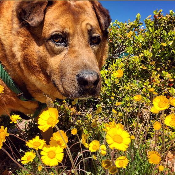 Misha_smelling_flowers_570