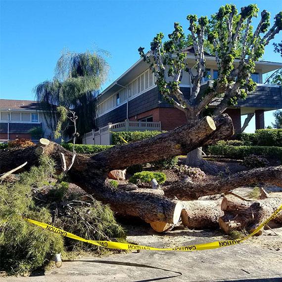 sdouglas_fallen_tree_570