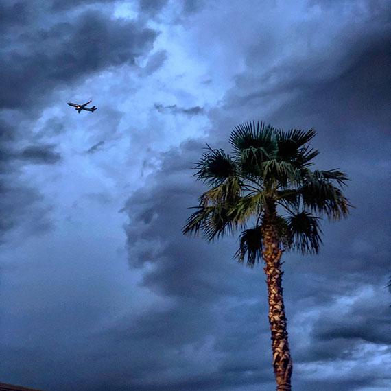 plane_palm_sky_570