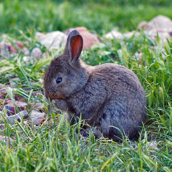 bunnies_of_bonnie_brae_570