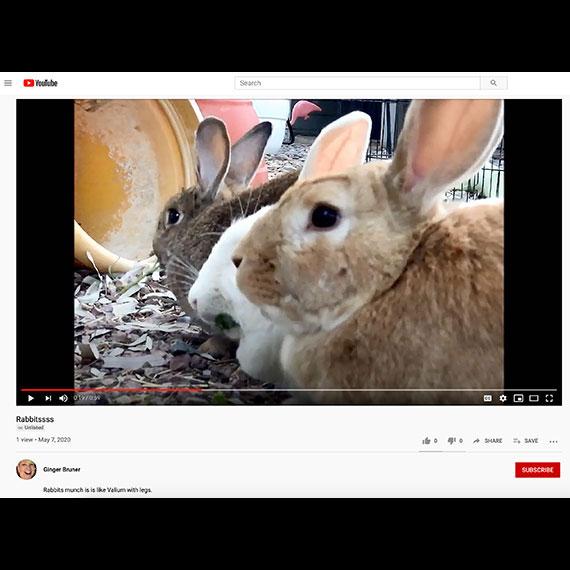 rabbitssss_yt_570
